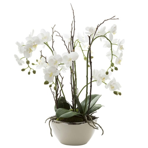 Gorgeous White Orchids